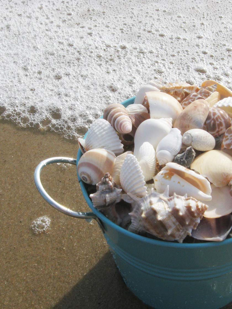 Rehoboth Beach and Dewey Beach Delaware, seashells