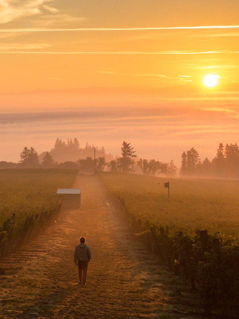 Yamhill Brooks Winery - Sunset, Willamette Valley, OR