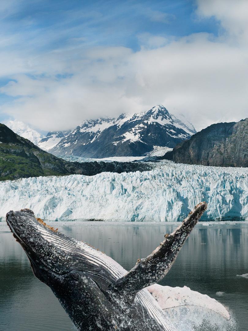 Visit Alaska Whale Watching