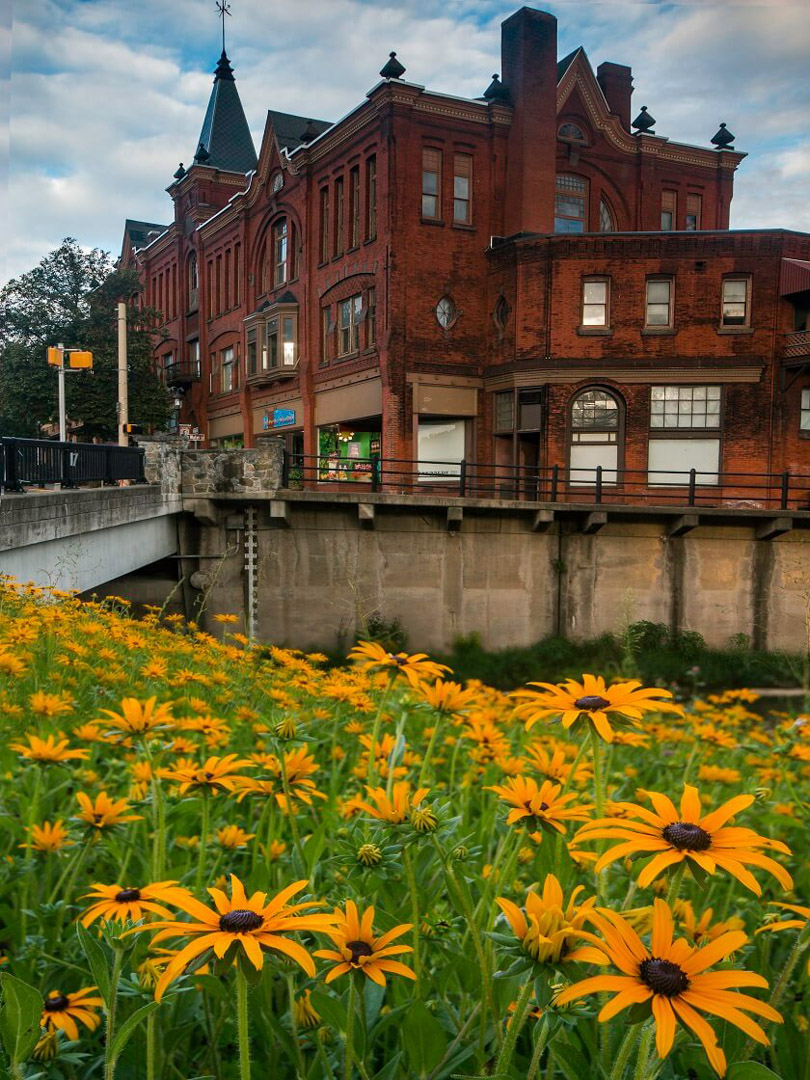 Bellefonte Flower, State College, PA