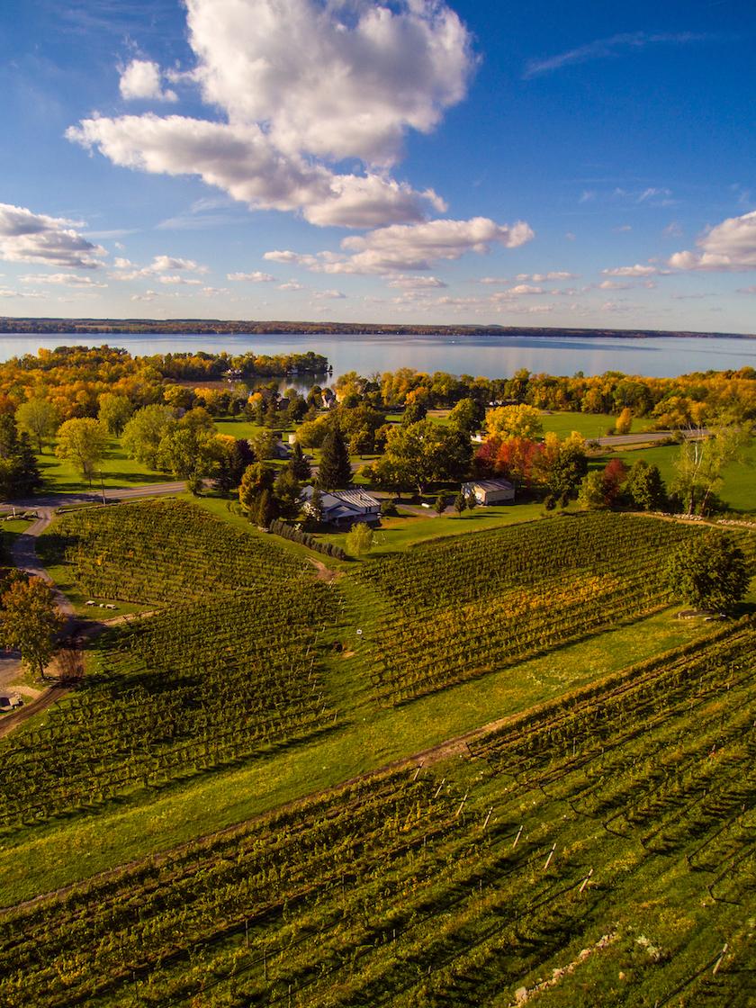 Estate Vineyard, Cayuga County, NY