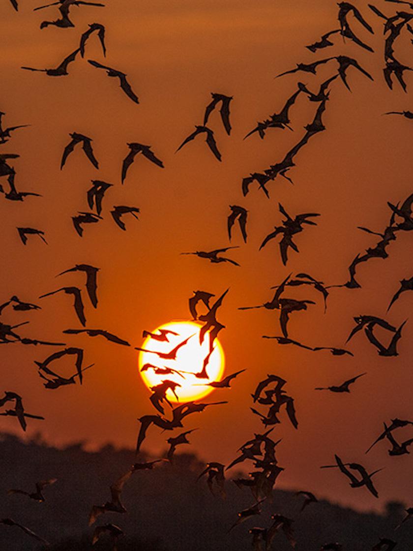 Bats, Uvalde, TX